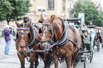 Prague2015_LoRes-17