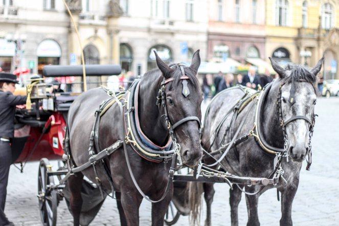 Prague2015_LoRes-19