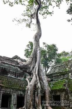 Cambodia 2015 LowRes-148