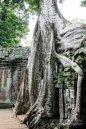 Cambodia 2015 LowRes-154