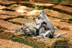 Cambodia 2015 LowRes-198